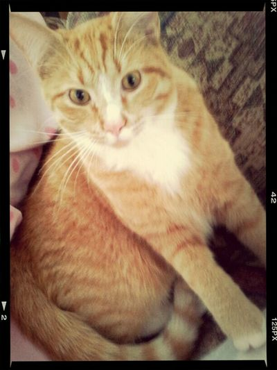 My new friend Chisholm, the handsome ginge. Testing new photo apps :) Lolo, Mt