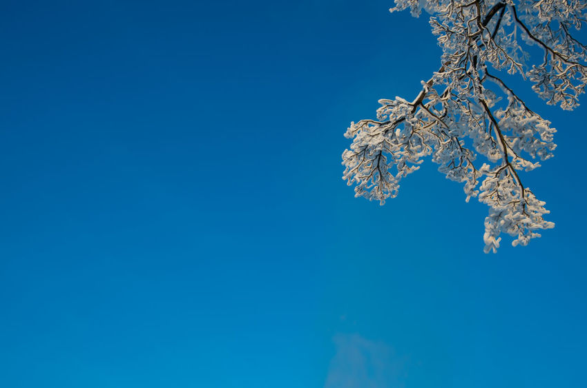 sky . branch . snow Beauty In Nature Blue Branch Clear Sky Cold Temperature Cristal Clear Cristals Day EyeEm Best Shots EyeEm Nature Lover Leaves Minimalism Minimalobsession Nature Nature No People Outdoors Snow Flake Snow ❄ Tree Weather White Winter The Great Outdoors - 2017 EyeEm Awards Lost In The Landscape Shades Of Winter