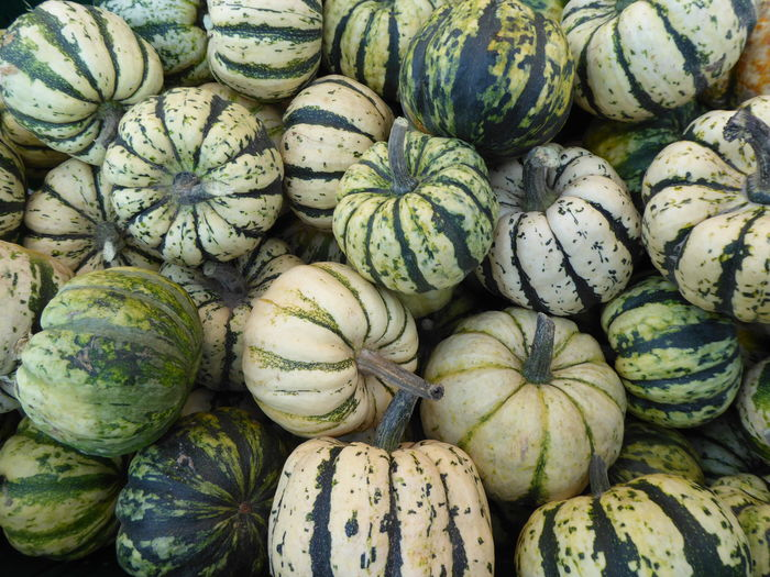 Container full of pumpkins and gourds at markets