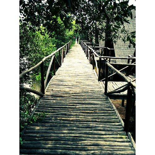 InstaMagAndroid Mangrove Mangrovebridge Fricosihaloho Jakartatrip