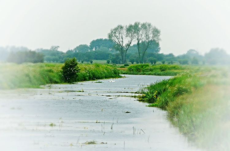 Somerset Levels Uk In All Its Glory Summer Memories 🌄 Nature On Your Doorstep Nature Relaxing Taking Photos