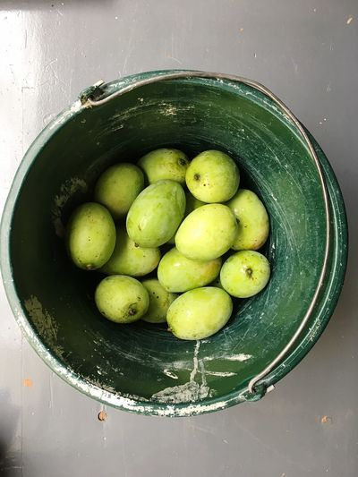 Green mangoes Indian Fruits Indian Fruit Fruit Fruits Bucket Green Mangoes Mango Food And Drink Healthy Eating Food Freshness Wellbeing Green Color Fruit Directly Above Indoors  Still Life Bowl High Angle View Water Table No People Close-up Organic Container Household Equipment