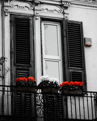 Window Built Structure Flower Building Exterior Architecture Outdoors House Window Box City Exploring Canon_offical Passionforphotography Canon1100d Canoneos1100D Amateurphotography Blackandwhite BW_photography Bw_collection Blackandwhite Photography Bnw_collection Neverstopexploring  Architecture Bnwphotography Flowers RedFlower