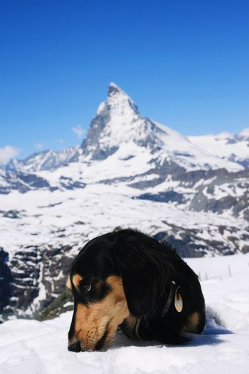 Dog on snow covered mountain against sky
