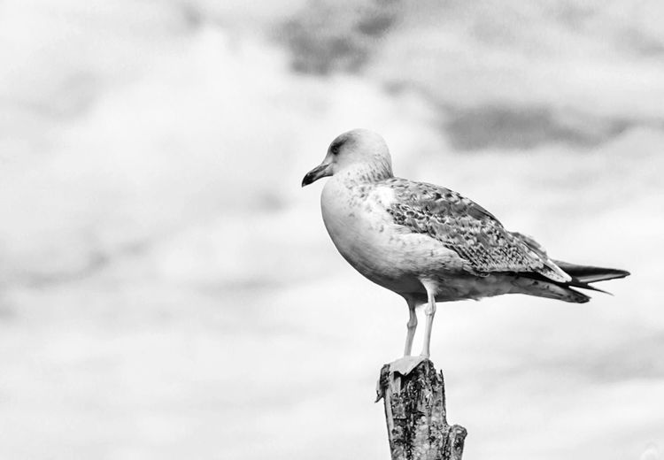 Seagull. Check This Out Thenonphotographer Neverstopexploring  Doyoutravel Cheese! Streetphotography Birds Enjoying Life Hello World