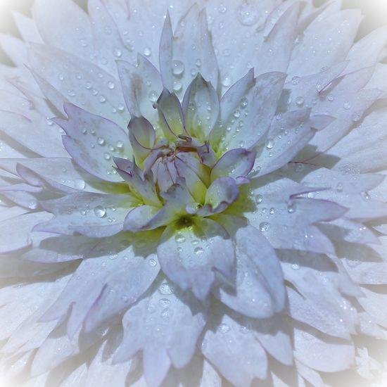 Flower Flowering Plant Water Plant Petal Flower Head Freshness