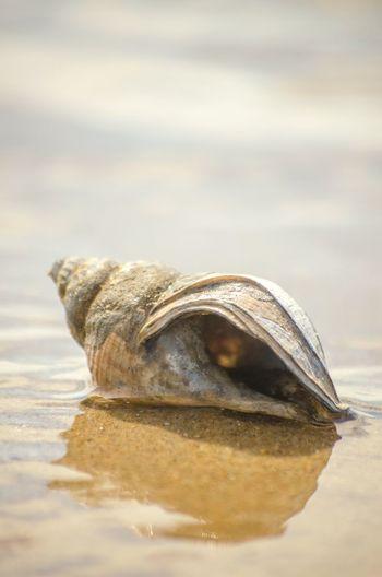 Shell Shells