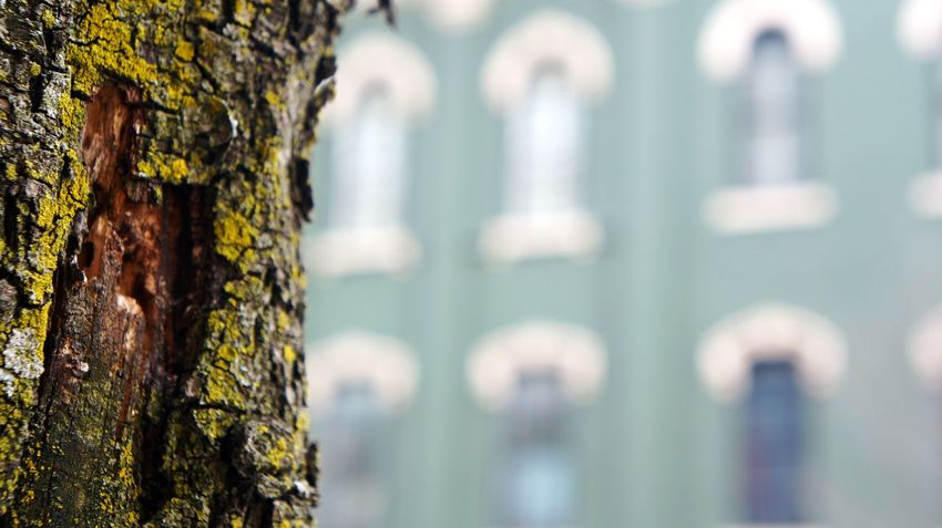 Architecture Backgrounds Building Close-up Day Detail Focus On Foreground Full Frame Green Growth In A Row Lychen Nature No People Old Outdoors Part Of Pattern Rough Textured  Tree Tree Trunk Up Close Street Photography Urban Photography Window Adapted To The City