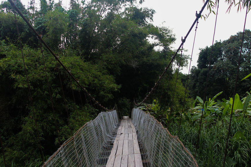 Green Nature Wood Beauty In Nature Bridge Bridge - Man Made Structure Connection Day Footbridge Forest Malaysia Nature No People Old Outdoors River Rope Bridge Scenics Sky Symmetry The Way Forward Tree Village