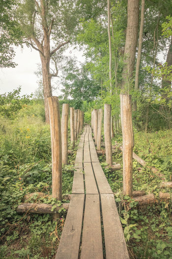 Wooden walkway amidst trees in forest