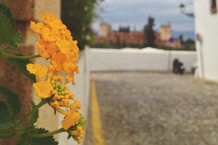 Happy Memorial Day to my US Friends with this blur of La Alhambra from San Nicolas balcony Memorial Day EyeEm Best Shots Let's Do It Chic! Respect For The Good Taste Street Lamp Monday Street Photography Discover Your City Fresh Scent Growing Better 22:50 34^ 01:00