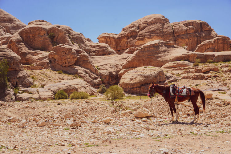 View of horses on rock