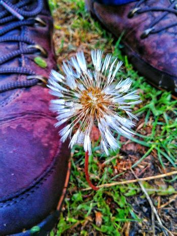 """""""Best things in life cannot be seen or touched , it can only be felt from the heart"""" - Helen Keller Precious Moments Beautiful Nature Dandelion Nature By My Side Walking In The Woods Landscape_Collection Rainy Day Getting Inspired Beautiful London Photooftheday Free Open Edit"""
