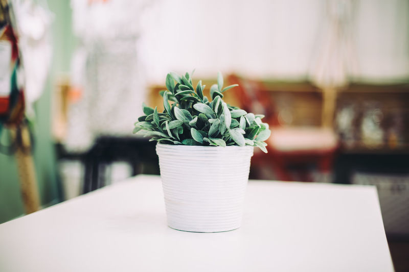 Green succulent plant on the table Close-up Concept Day Desk Floral Fresh Freshness Green Color Growth Healthy Lifestyle Home Houseplant Indoors  Lieblingsteil No People Plant Potted Plant Room Succulent Plant Table