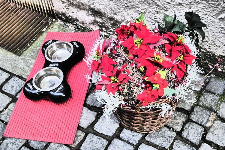Purplesnail Regensburg Beauty In Nature Close-up Day Dog Love Flower Flower Head Fragility Freshness High Angle View Nature No People Outdoors Petal Red Street Table Water