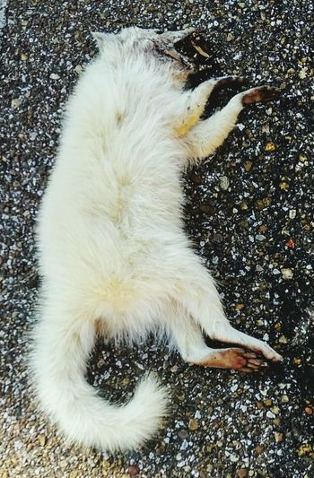 Grey/gray FoxPoor fox!Roadkill so sad Outdoors On The Road Driving Wildlife & Nature Wildlife Photography Mammal
