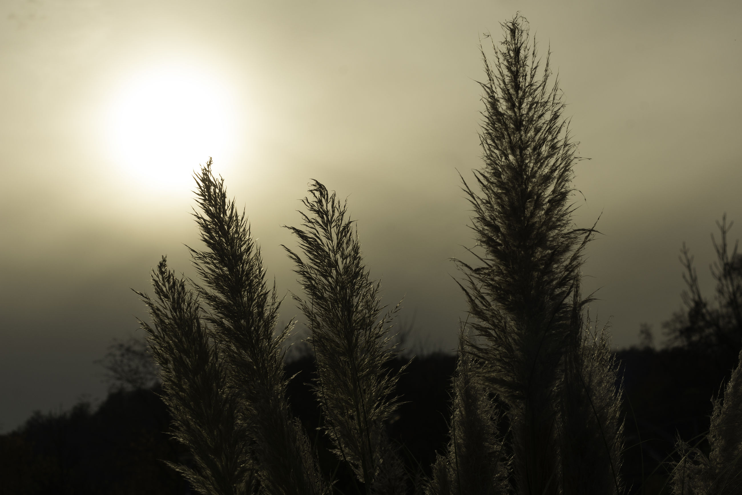 growth, tree, nature, beauty in nature, no people, tranquility, plant, outdoors, sky, tranquil scene, scenics, close-up, sun, day