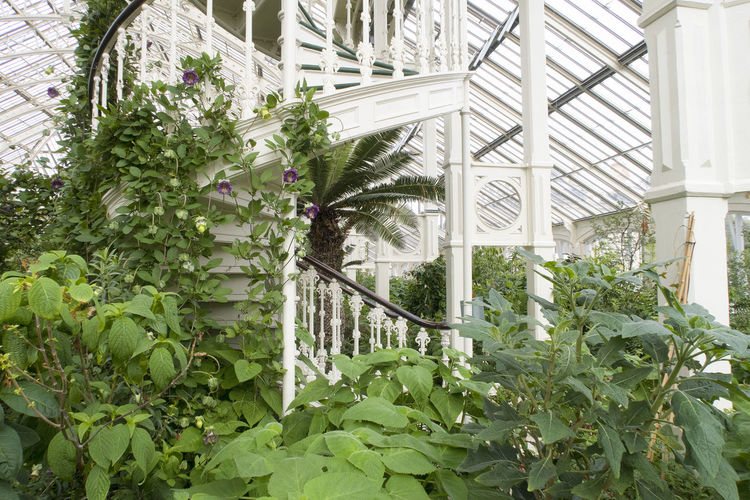London, United Kingdom - October 8, 2018; plants and stairs in the temperate house the largest victorian glasshouse in the world at Royal Botanical Gardens, Kew in Richmond upon Thames Kew Gardens Kew Gardens, London Plant Steps Stairs London United Kingdom Architecture Greenhouse Plant Part Nature Botany Gardening