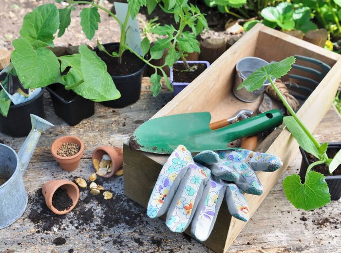 Can Close-up Container Dirt Flower Pot Gardening Gardening Equipment Growth Leaf Nature Plant Plant Part Potted Plant Seedlings Spring
