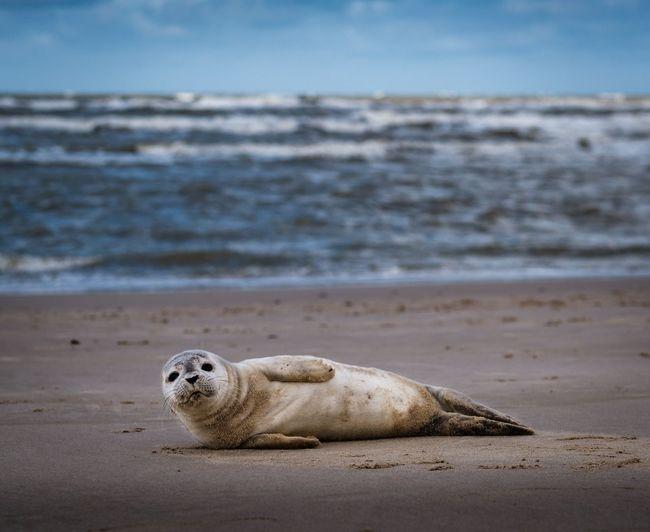 Seal at beach