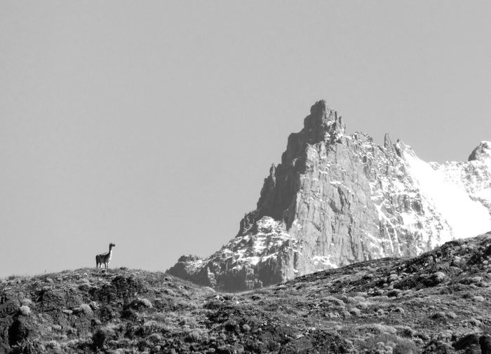 Sky Mountain Rock Copy Space Nature Beauty In Nature Rock - Object Rock Formation Clear Sky Solid Scenics - Nature Tranquility Day Tranquil Scene Outdoors Environment Lifestyles Land Real People Formation Mountain Peak Chile Patagonia Guanaco Llama Torres Del Paine Pampas Grass Rock Formation Animal Themes Animal In The Wild Wildlife Wildlife & Nature Blackandwhite Monochrome The Great Outdoors - 2019 EyeEm Awards