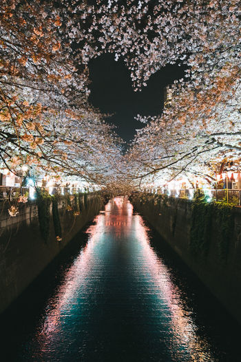Cherry Blossoms Japan Love Architecture Beauty In Nature Building Exterior Built Structure Canal Diminishing Perspective Direction Flowers Heart Heart Shape Illuminated Lighting Equipment Nature Night No People Outdoors Plant Reflection River Tree Water Waterfront HUAWEI Photo Award: After Dark