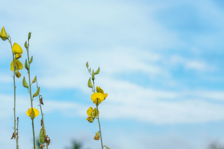 Low angle view of yellow flowering plant against sky