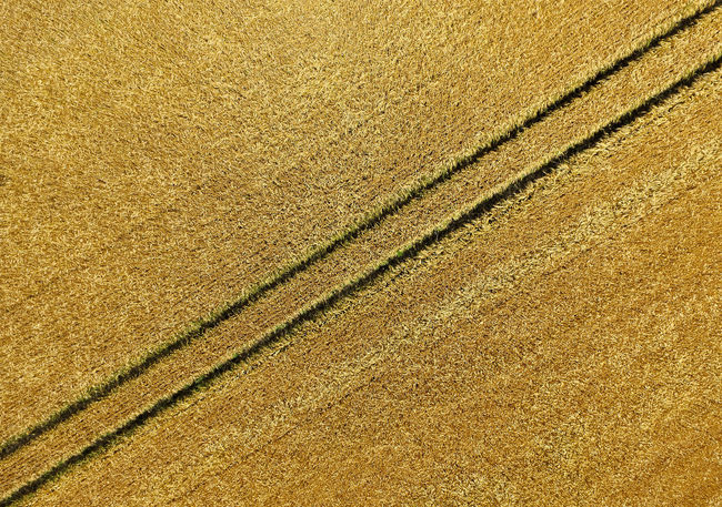 Wheat field, abstract background and texture Aerial Shot Drone  Wheat Wheat Field Yellow Flower Aerial Aerial View Backgrounds Beauty In Nature Cereal Plant Day Drone Photography Droneshot Field Fields Full Frame Grass Growth Landscape Nature No People Outdoors Rural Scene Texture Textured