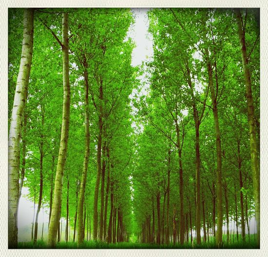walking in the green wood