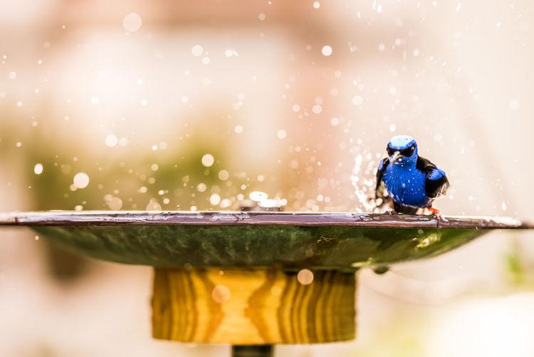 Bird taking