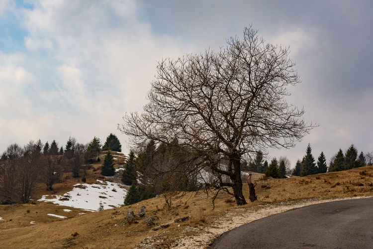 Erve Erve Miozzo Photo Miozzo No People Land Bare Tree Tranquil Scene Non-urban Scene Scenics - Nature Landscape Beauty In Nature Tranquility Tree Sky Plant Environment Outdoors Cloud - Sky Nature Day Road Cold Temperature Field