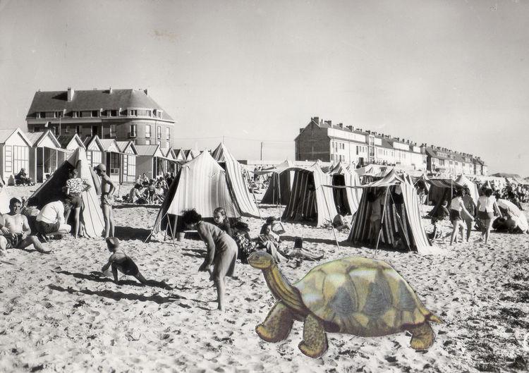 Antique Art Collage Ephemera France French Manuscript Outdoors Postcard Retro Turtle Vintage