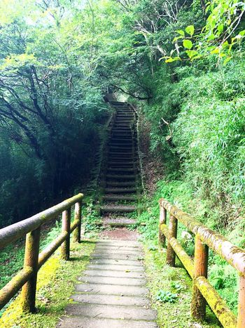 The Way Forward Direction Staircase Railing Plant Day Steps And Staircases Green Color Nature No People Tree Outdoors Green Footpath High Angle View