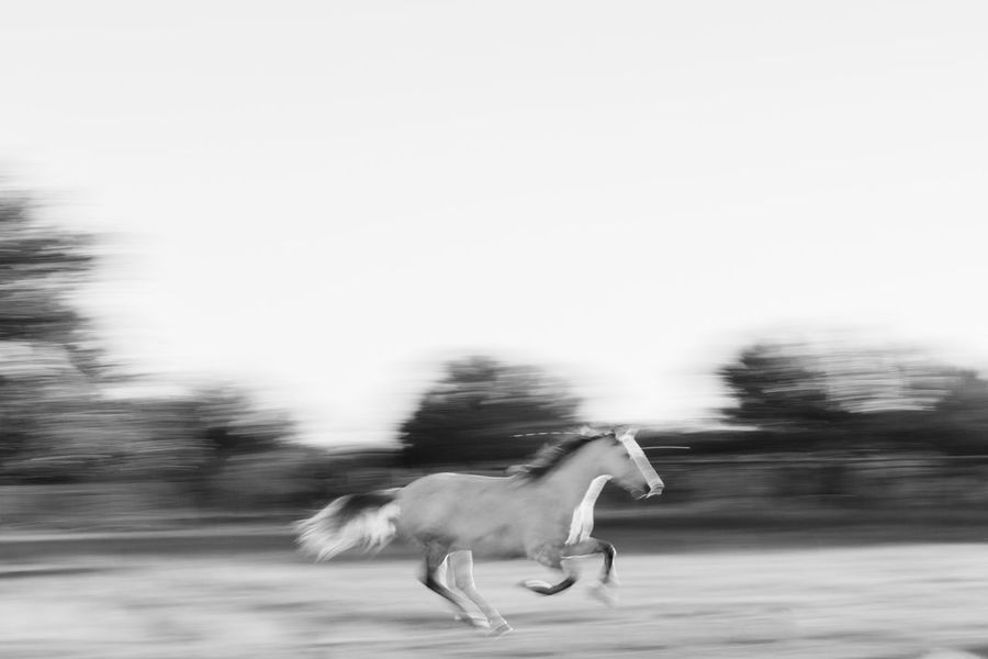 Running Horse White Horse Animal Themes Blurred Motion Close-up Day Dog Domestic Animals Full Length Mammal Motion Nature No People One Animal Outdoors Pets Road Side View Sky Speed