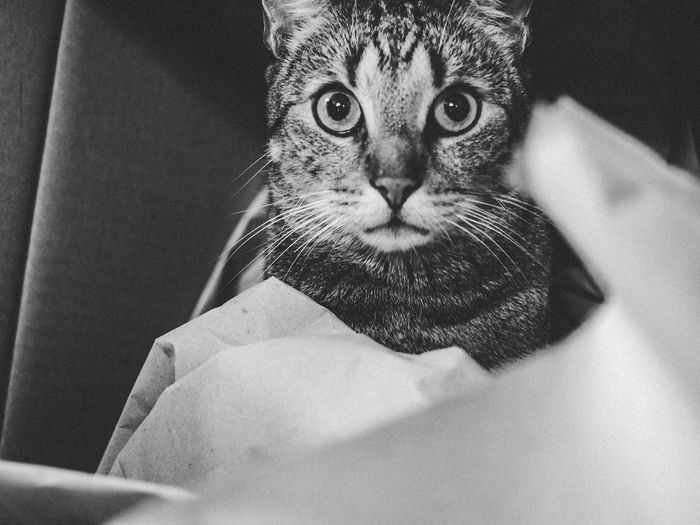 Cat Cats EyeEm