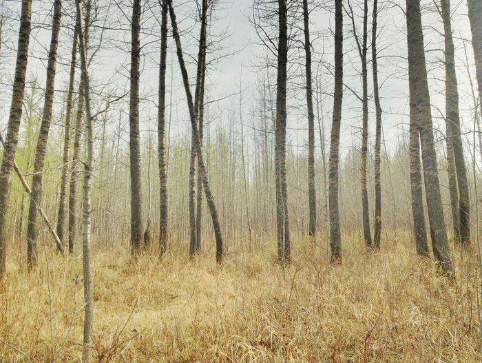 Trees NEM Environment NEM Submissions NEM Landscapes