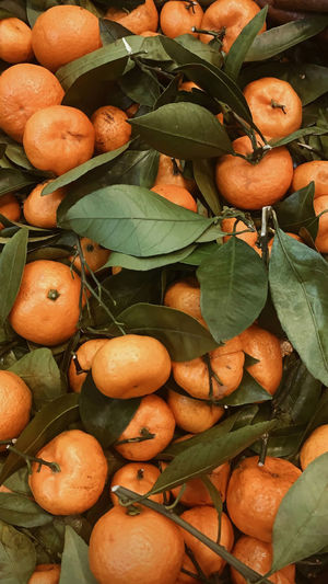 High angle view of fruits