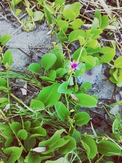 PUERTO RICO 🇵🇷 Foto Beach Flower Purple Isla Del Encanto By  Darleanys Photography