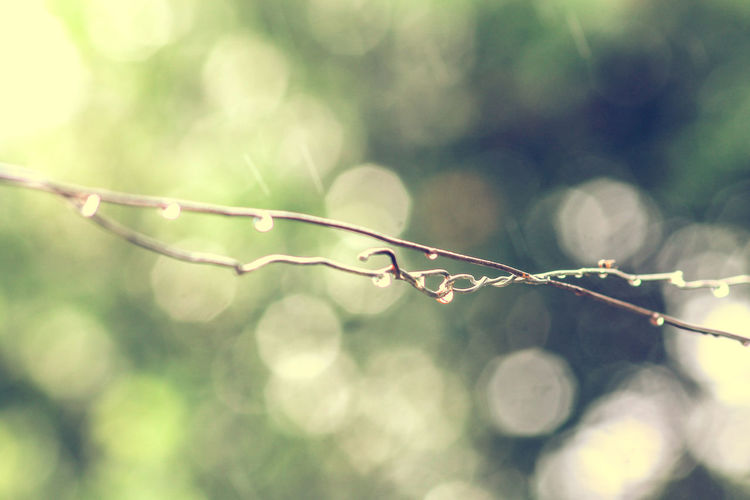 Rain Drops On A Wire Iron Wire Nature Close-up Focus On Foreground No People Cold Temperature Rainy Day Bokeh Photography Bokeh Background Copy Space Minimalism Beauty In Nature Day Textured  Textures And Surfaces Tropical Climate Summer Rain