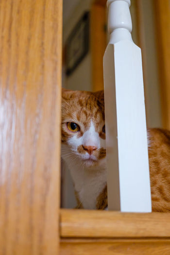 Portrait of ginger cat seen through railing