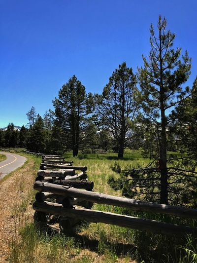On the Fence Tree Landscape Clear Sky Outdoors Field Tranquil Scene Tranquility Nature Blue Day Beauty In Nature Scenics Grass Sky Lake Tahoe Destination Travel Destinations Wooden Log Fence Fence