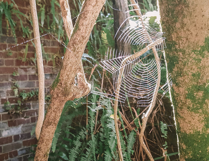Spider web Tree Plant Trunk Animals In The Wild Animal Themes Animal Tree Trunk Nature Day No People Branch Outdoors One Animal Mammal Growth Forest Animals In Captivity Herbivorous Spider Web Spider