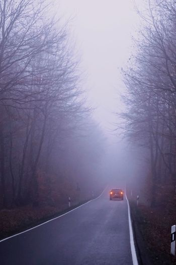 Car Lights Dark Forest Spooky Fall Colors Autumn Foggy Road Roadside Winter Danger Limited View Foggy Day Transportation Road Tree Car Mode Of Transportation Motor Vehicle Winter Land Vehicle Fog Cold Temperature Bare Tree Nature Plant No People on the move Street Branch Outdoors