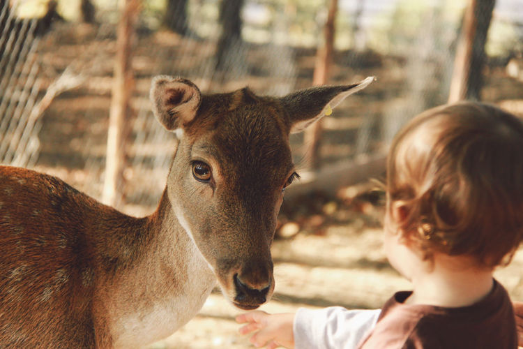 Rear view of boy standing by deer at zoo
