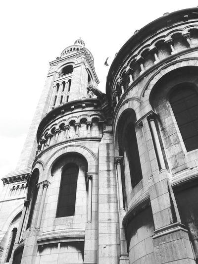 P A R I S France Notre-Dame Bird
