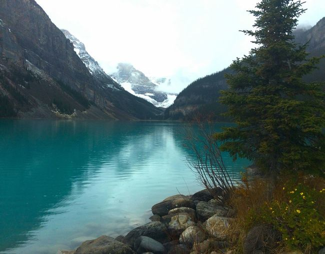 Reflection Nature Landscape Scenics Lake Tree Sky Beauty In Nature No People MountainNature Outdoors Water Freshness Day EyeEmNewHere Reflection Lake Water Reflection Lake Louise,Alberta Lake Louise  Alberta Canada Travel Photography Rocks In Water Beauty In Nature