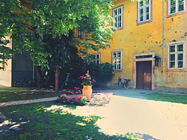 43 Golden Moments MyUniversity Contest Sunlight Goldensunspot First Eyeem Photo
