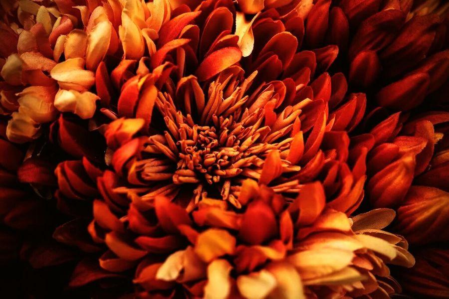 Flower Nature Orange Color Photography Orange Red