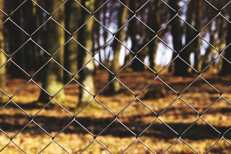 Full Frame Shot Of Chainlink Fence Against Trees In Forest
