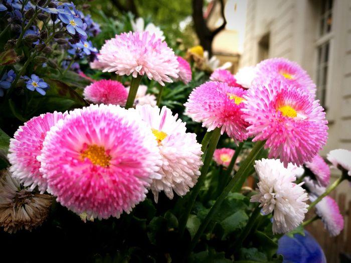 Pink spring Flower Plant Pink Spring Blossom